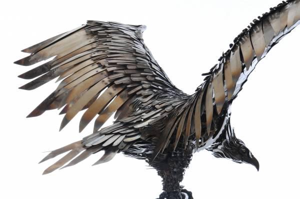 Eagle reverse